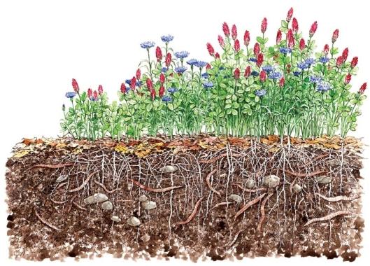u zdravom tlu zdravo povrce - ilustracija 2